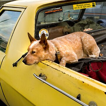 RED DOG, YELLOW UTE by afildes