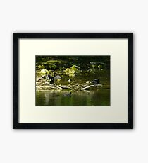Two Shags on a Stick Framed Print