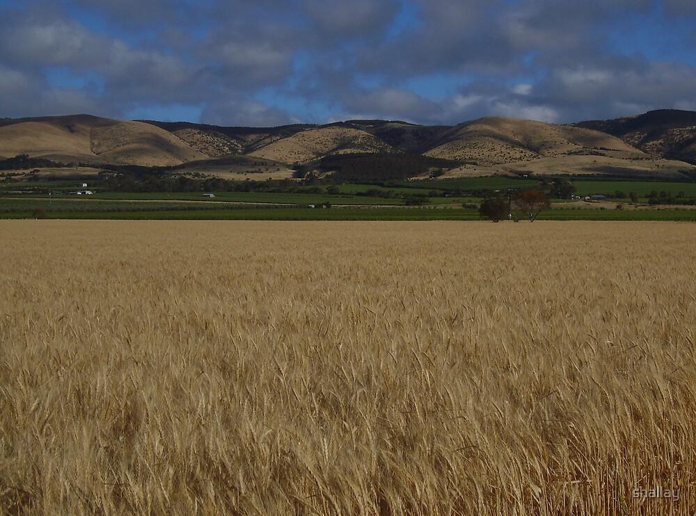 shadow hills with crop - Willunga range, SA by shallay