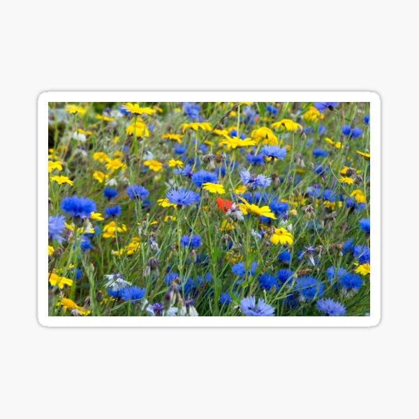 Blue Cornflowers and Yellow Daisies Sticker