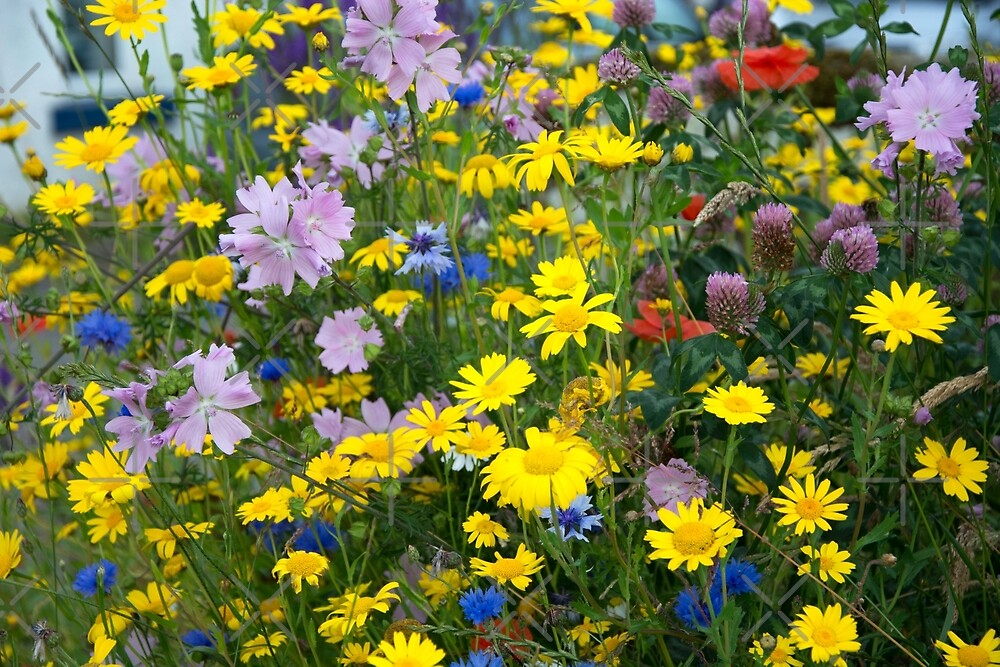 Closeup on Wildflowers by SiobhanFraser