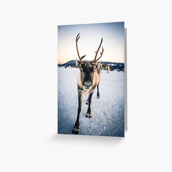 Reindeer Christmas Card Greeting Card