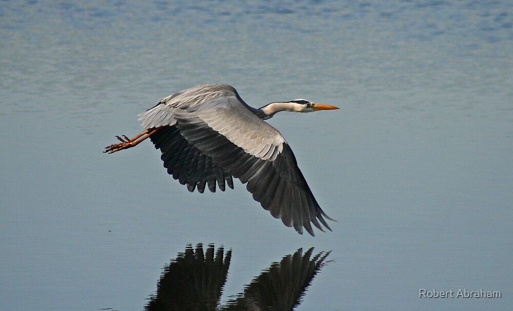 Wings Over Water by Robert Abraham