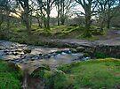 Dawn Light: Burrator Woods Dartmoor.  by DonDavisUK
