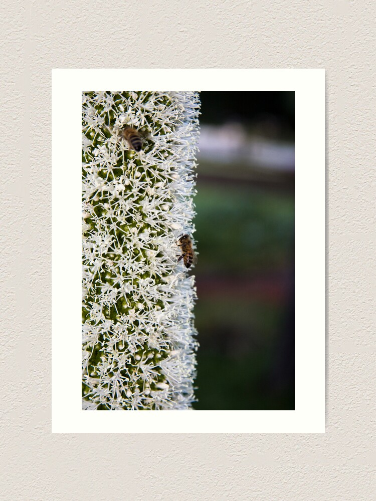 Alternate view of Grasstree flower with bees Art Print