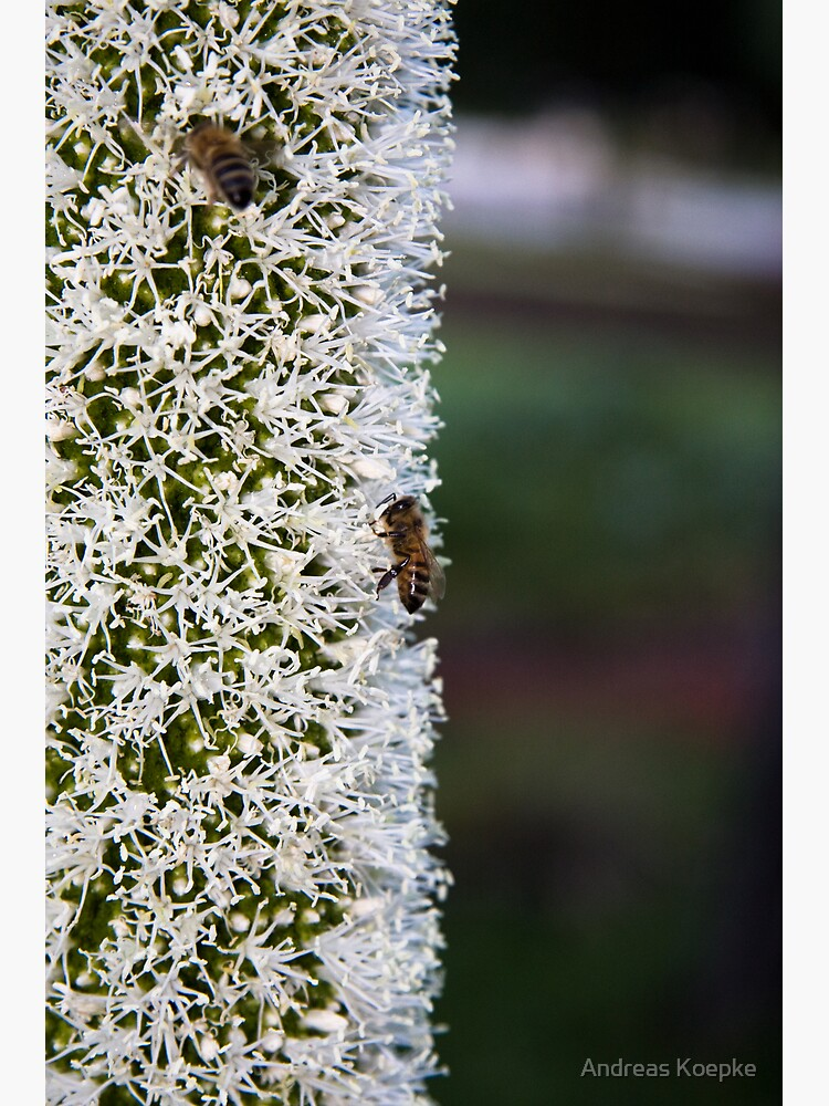 Grasstree flower with bees by mistered
