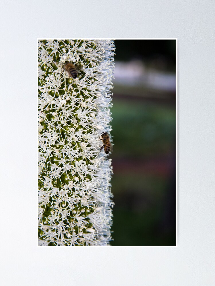 Alternate view of Grasstree flower with bees Poster