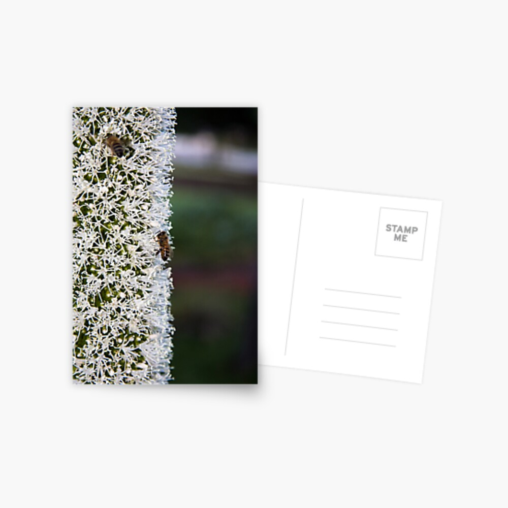 Grasstree flower with bees Postcard