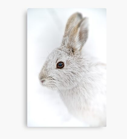 Showshoe Hare Metal Print