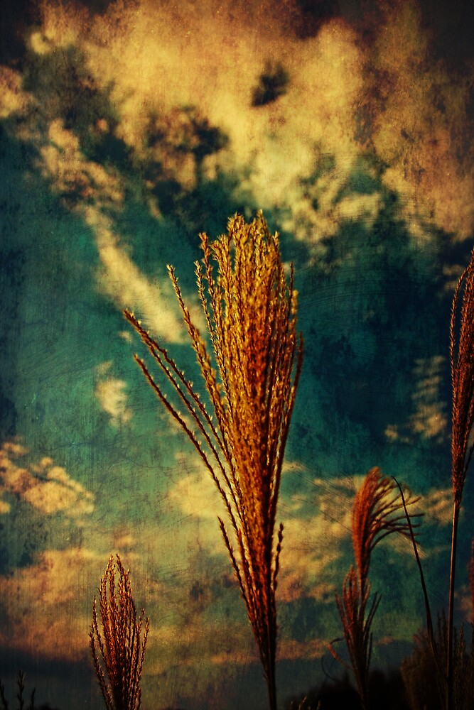 Amber Waves of Grain by MClementReilly