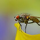 Fly on Petal by relayer51