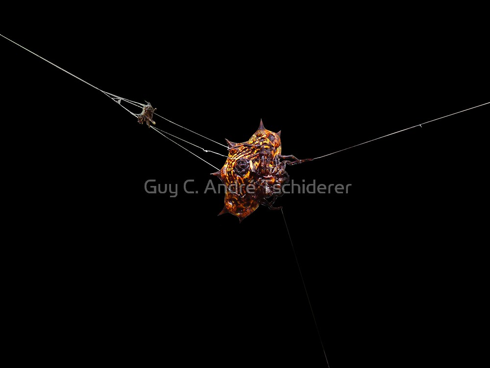Spider by Guy C. André Tschiderer