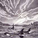 Breaking The Silence - Orca by John Houle