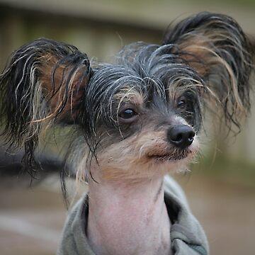 Chinese Crested Dog by AnthonyThomas