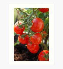 Baby Tomatoes Art Print