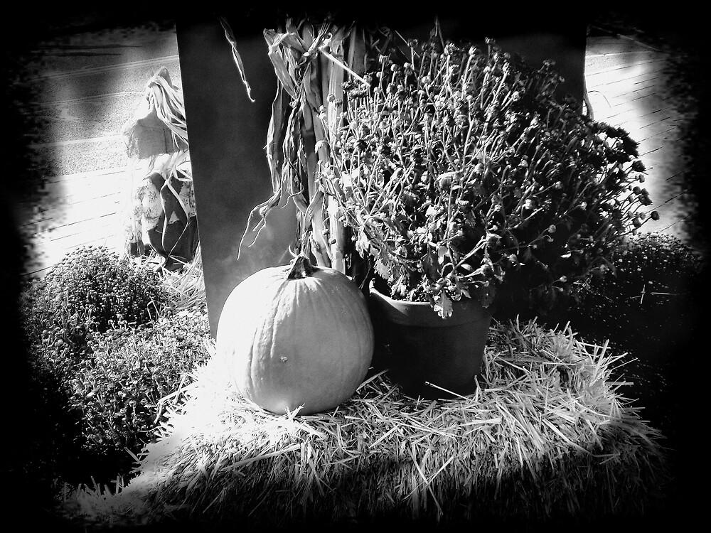pumpkin display by vpiombo