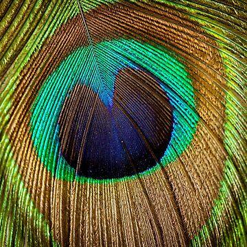 Peacock feather by Vitalia