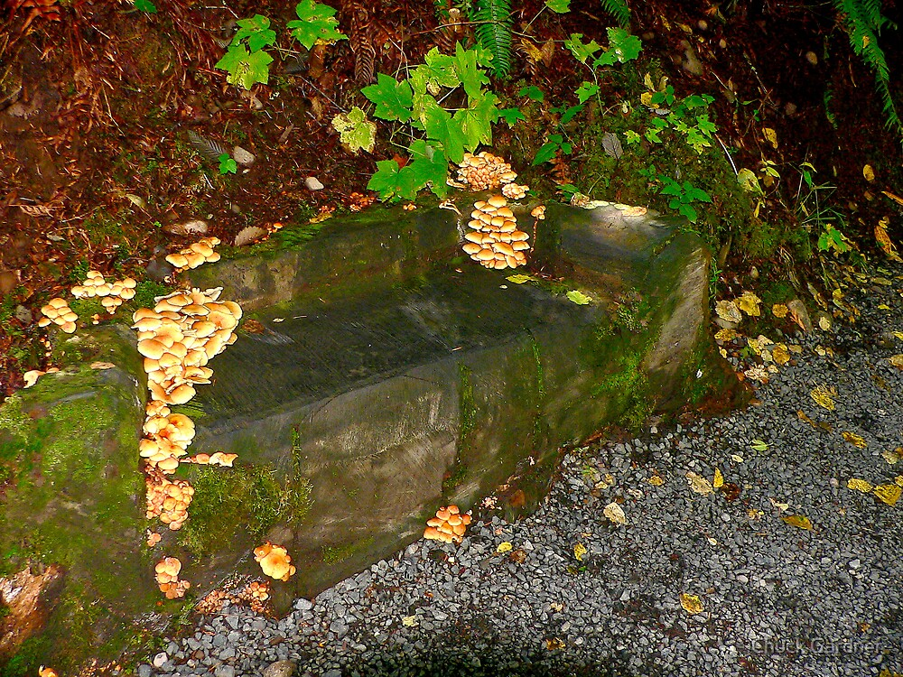 Nature Reclaims Old Bench # 7 by Chuck Gardner