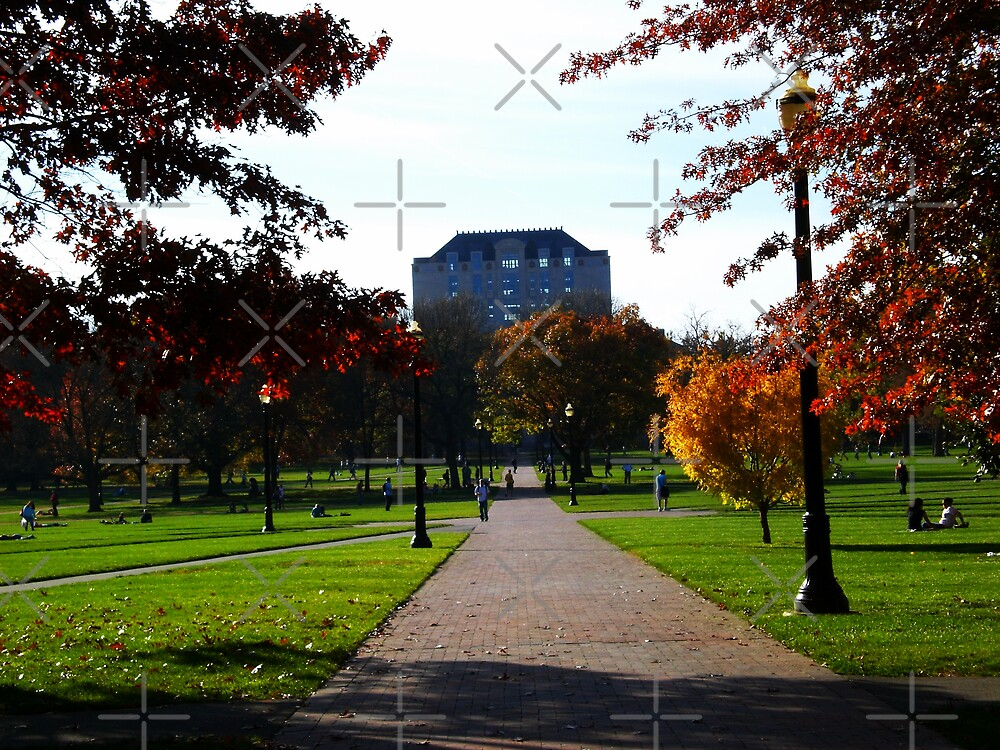 Another Fall Day - On the Oval w/ Library  by rmcbuckeye