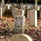 Lost Memories ( Veteran's  Day ) by velveteagle