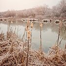 Cattails by Brent Craft