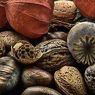 Seeds of Life by Ann Garrett