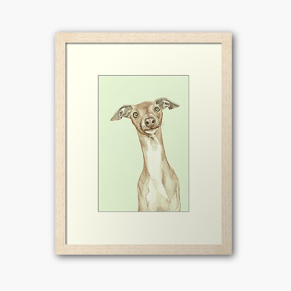 Curious dog green background Framed Art Print