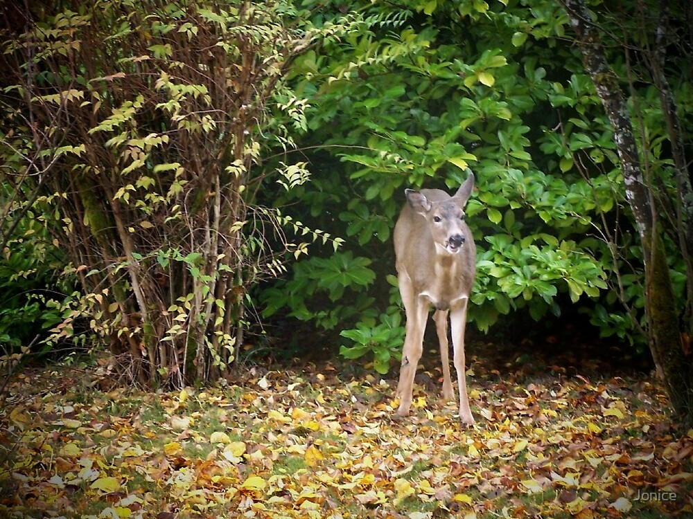 Fall Doe Eating A Apple by Jonice