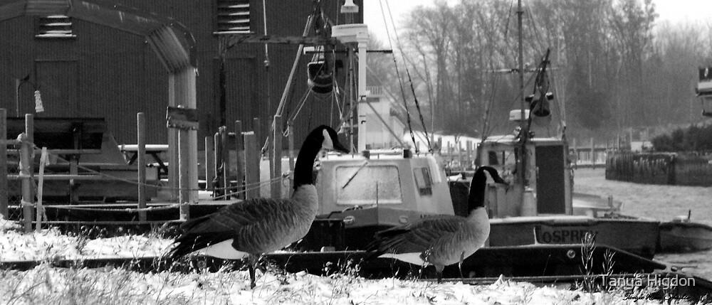 Snow Geese by Tanya Higdon