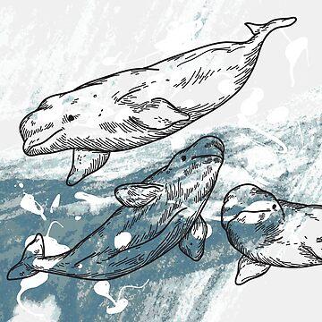 Splashy Beluga Whales by samposnick