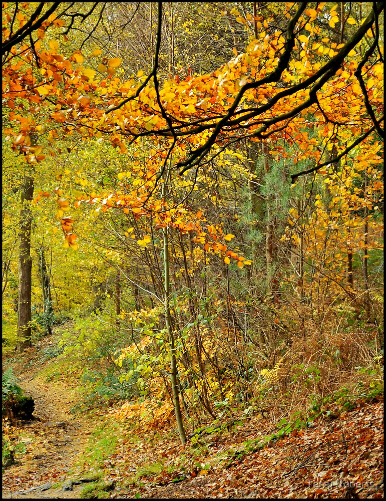 Autumn by Terry Roberts