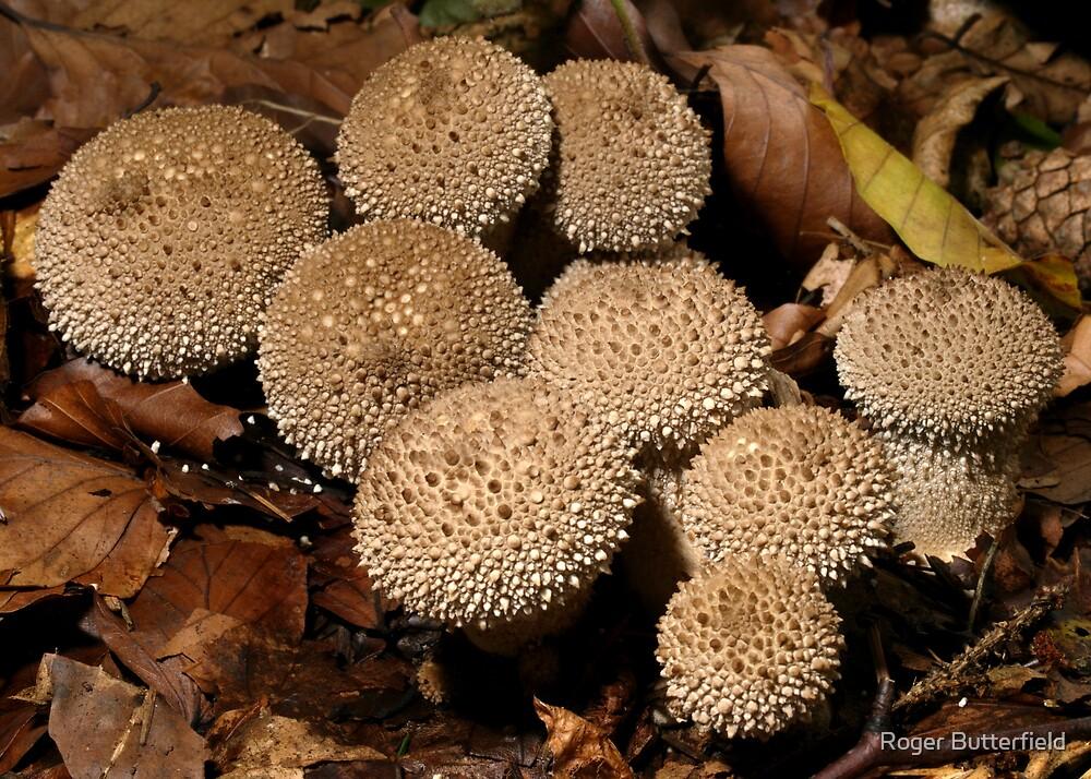 Puffballs by Roger Butterfield