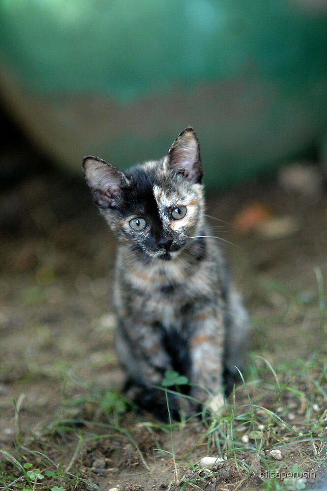 little mimetic cat by elisaperusin