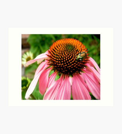 Pink flower with a visitor Art Print