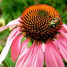 Pink flower with a visitor by Shulie1