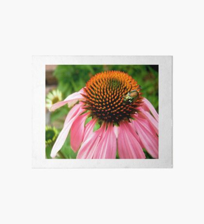 Pink flower with a visitor Art Board