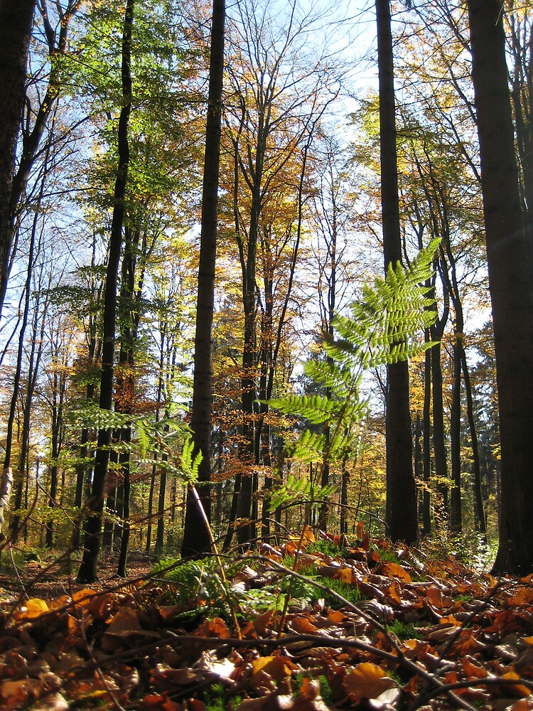 autumn forest, Germany 2008 by HenRike  Clemens