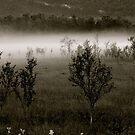 Midnight Mystery . Norway . © DrAndrzej Goszcz Photography by © Andrzej Goszcz,M.D. Ph.D