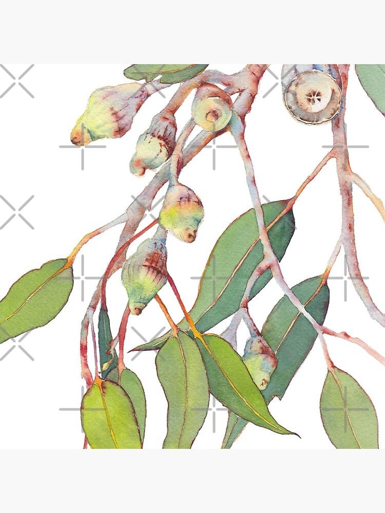 Australian native eucalyptus tree branch by zoyamakarova
