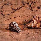 Shells II by andreisky