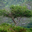 Irish Tree by Spyte