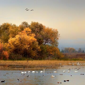 Autumn on the Marsh by Osso