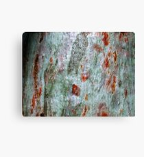 """Brush-strokes on Bark"" Canvas Print"