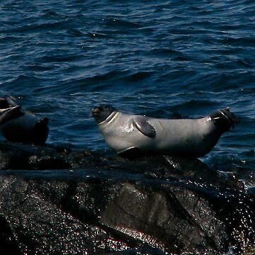 Sea Lion by Spyte