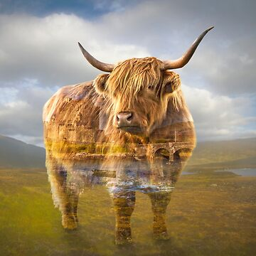 Highland cow recalls by hayleyrphoto