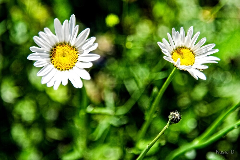Daisy, Daisy, give me your answer do.. by Kasia-D