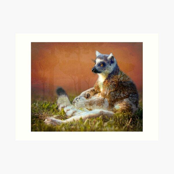Lemur's wish Art Print