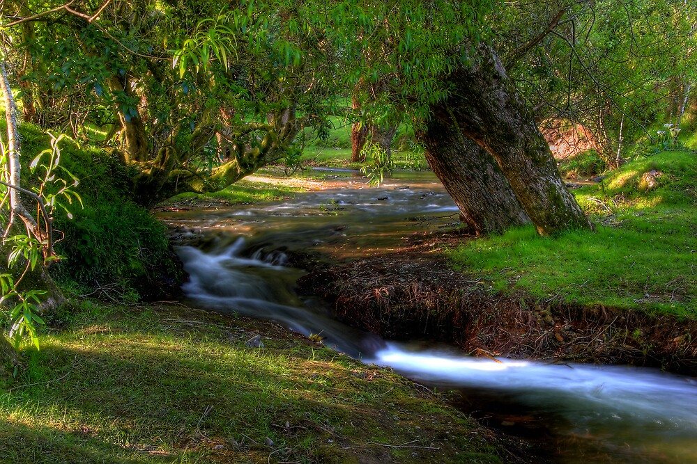 Tranquil Stream by Eben Venter