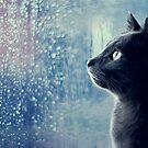 Kitty's Fascination by brightfizz