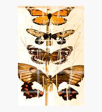Entomology Photographic Print